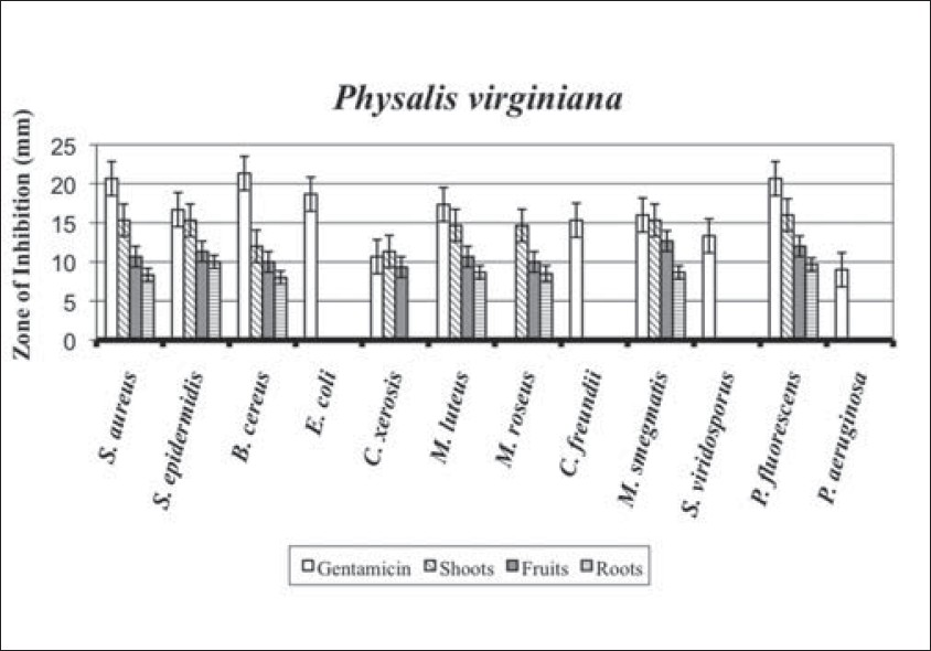 Figure 1: Zones of inhibition (mm) for the plant <i>Physalis virginiana</i> against the 12 bacteria. Positive control was gentamicin and negative control was ethanol. All ethanol controls had 0 mm zones of inhibition. Error bars indicate upper and lower 95% confi dence intervals. Linear regression ANOVA results: (shoots) <i>R</i><sup>2</sup> = 0.9595, Prob > <i>F</i> ≤ 0.0001; (fruits) <i>R</i><sup>2</sup> = 0.9705, Prob > <i>F</i> = <0.0001; (roots) <i>R</i><sup>2</sup> = 0.9839, Prob > <i>F</i> = <.0001; (gentamicin) <i>R</i><sup>2</sup> = 0.9389, Prob > <i>F</i> = <.0001