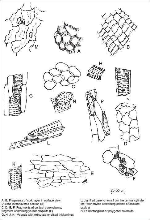 Figure 1: Illustration of powdered herbal drug of devil's claw root (see identification B)