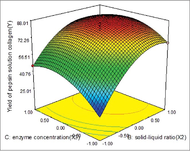 Figure 3: Response surface plot showing the effects of solid-liquid ratio and enzyme concentration on the yield of pepsin-soluble collagen: the extraction time was constant at 6 h