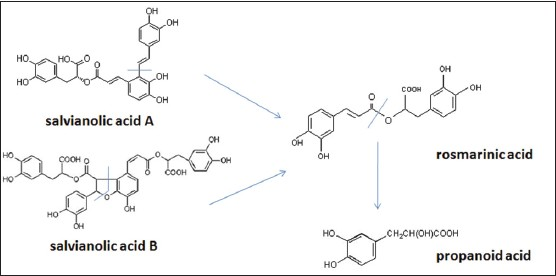 Figure 3: The degradation processes of salvianolic acid A and salvianolic acid B