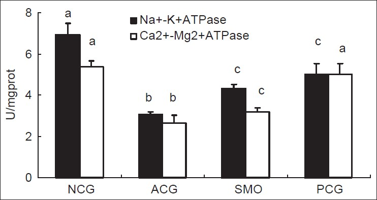 Figure 3: Activities of Na+-K+-adenosine triphosphatase (ATPase) and Ca2+-Mg2+-ATPase in the liver mitochondria of normal and aging mice. Data expressed as mean ± SD (n = 10);a,b,c Means in the same column with common superscript are not significantly different whereas values with different superscript are significantly different at P < 0.05