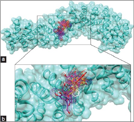 Figure 4: Binding patterns of the flavonoid inhibitors on â-catenin: (a) Binding cavity occupied by known and novel inhibitors, shown as a close-up in (b) figure is color-coded with cyan ribbon and surface, â-catenin; colored by atom type; flavonoid ligands