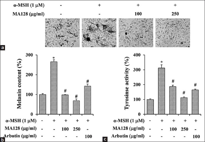 Figure 3: Effects of MA128 on the alpha-melanocyte stimulating hormone (α-MSH)-induced melanogenic activity in B16F10 cells. B16F10 cells were preincubated with or without 100 and 250 μg/ml MA128 for 12 h, and then simulated with 1 μM α-MSH for additional 36 h. (a) Accumulation of melanin in cells were observed under phase contrast microscope. Image magnification, ×200. Melanin content (b) and tyrosinase activity (c) were also determined. Arbutin (100 μg/ml) was used as positive control. Data are expressed as mean ± standard deviation of three independent experiments. <i>*P</i> < 0.05 versus untreated control, #<i>P</i> < 0.05 versus α-MSH stimulation