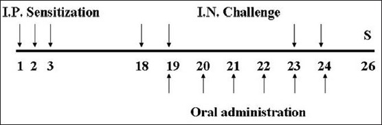 Figure 1: Experimental schedule. So-Cheong-Ryong-Tang (SCRT) and control group were sensitized intraperitoneally at days 1, 2, and 3 and challenged intranasally at days 18, 19, 23, and 24. Animals were administrated with SCRT from days 19 to 24. All animals were sacrificed at day 26. I.P.: Intraperitoneal; I.N.: Intranasal; S: Sacrifice