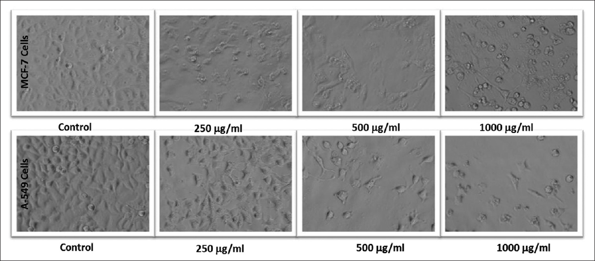 Figure 9: Morphological changes in MCF-7 and A-549 cells exposed to various concentrations of <i>Nepeta deflersiana</i>-9 for 24 h. Images were taken using an inverted phase contrast microscope at ×20