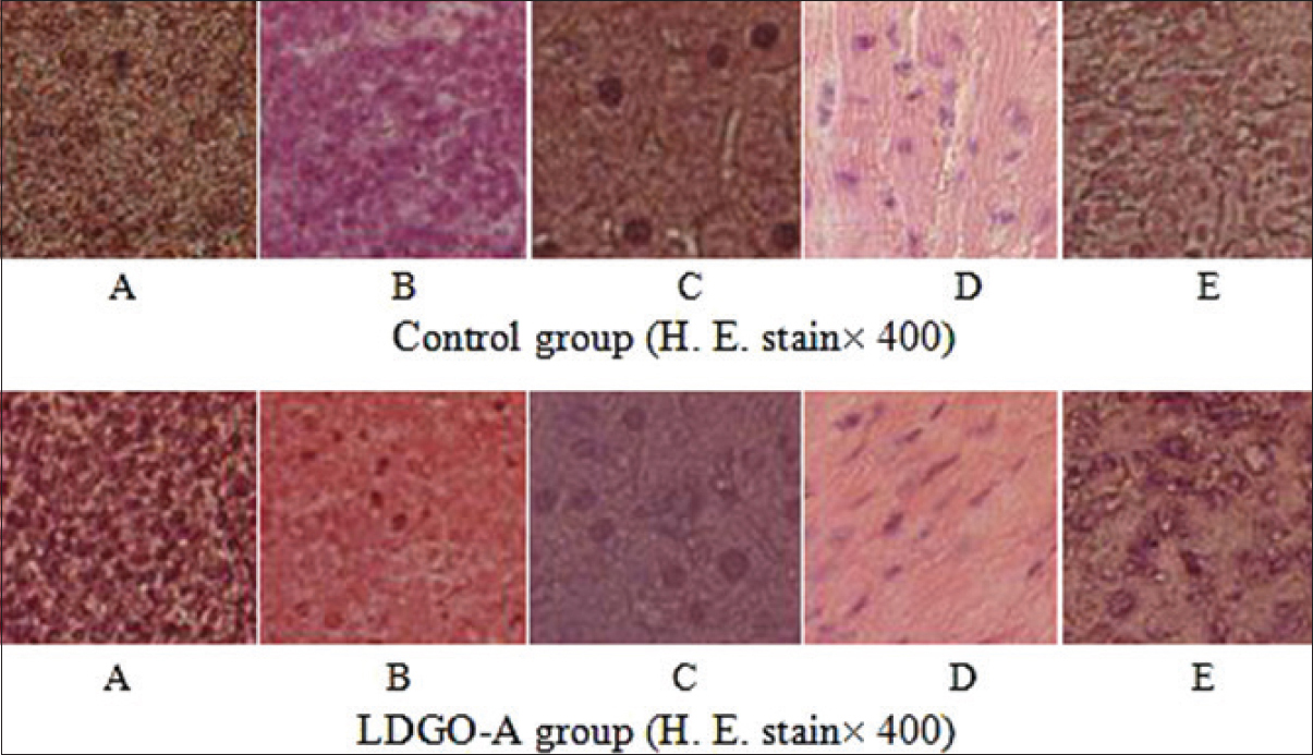 Figure 8: Histological preparations of the spleen (a) thymus (b) liver (c) heart (d) tumor (e) in oligosaccharide from <i>Lactarius deliciosus</i> Gray group (concentration of 40 mg/kg) compared with control group
