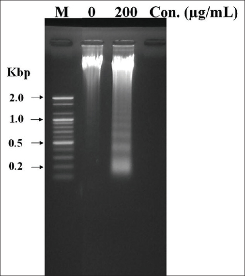 Figure 4: Effect of <i>Luffa echinata</i> Roxb. extracts on chromosomal DNA fragmentation. Samples were prepared from SW-480 cells incubated with or without 200 µg/ml of <i>Luffa echinata</i> Roxb. extract for 24 h. The DNA samples were analyzed by agarose gel electrophoresis. Lanes M is marker