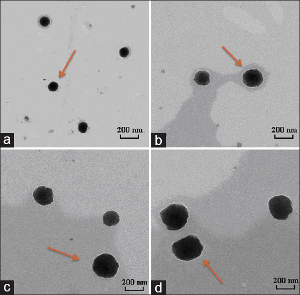 Influence of chitosan nanoparticles as the absorption