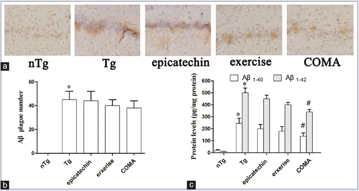 Figure 4: Effect of treadmill exercise and epicatechin on amyloid-β plaque formation and soluble amyloid-β production in the hippocampus of amyloid precursor protein/presenilin 1 mice. (a) Amyloid-β immunoreactive plaques formation in the hippocampus of amyloid precursor protein/presenilin 1 mice. Scale bar = 200 μm. (b) Quantification of the amyloid-β-positive plaques number. (c) Soluble amyloid-β1-40 and amyloid-β1-42 production by enzyme-linked immunosorbent assay kit. Values are expressed as mean ± standard error <i>n</i> = 8. Statistics (b and c): *<i>P</i> < 0.05 compared with wild-type littermates; #<i>P</i> < 0.05 compared with transgenic