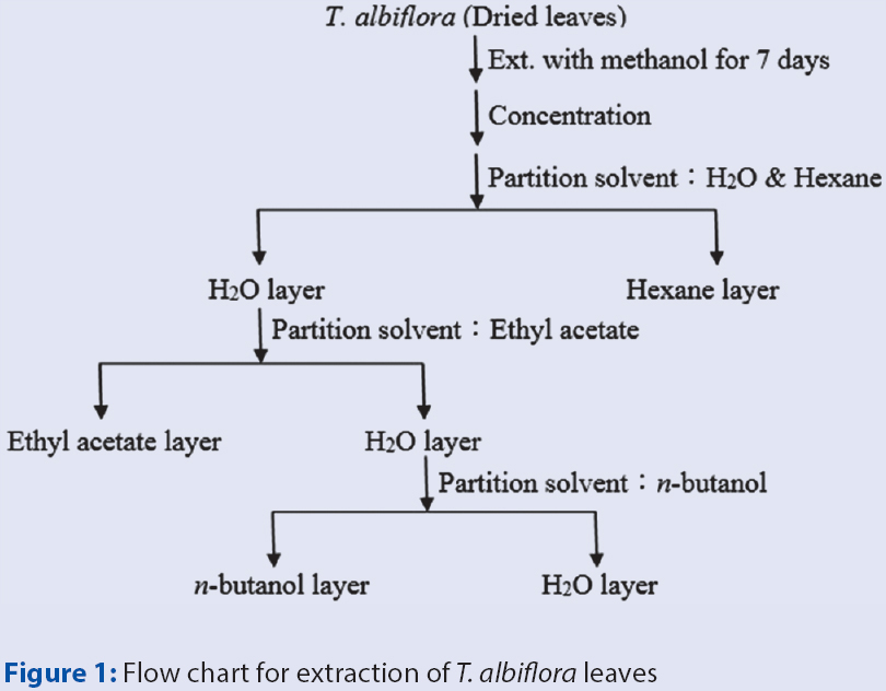 Figure 1: Flow chart for extraction of <i>T. albiflora</i> leaves