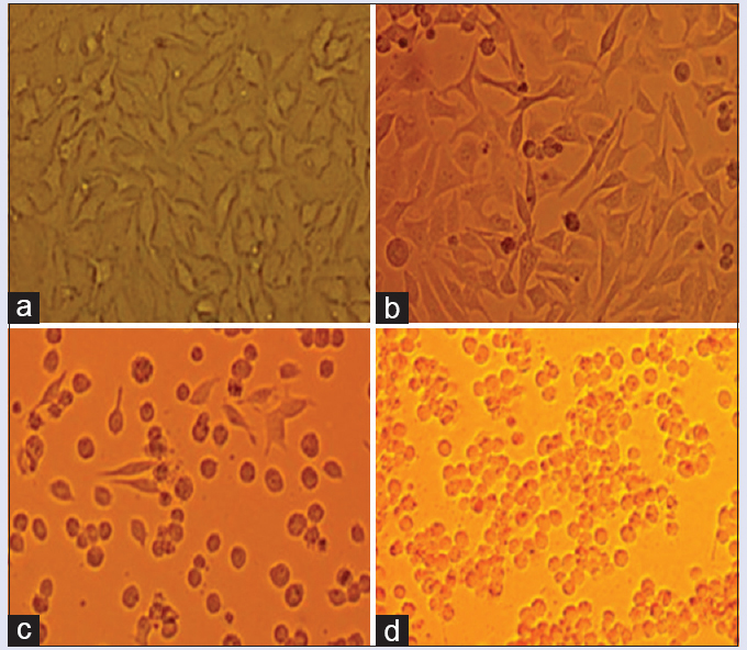 Figure 3: Different concentrations of the drug solution resulted in morphological changes in HeLa cells. (a) Control group: Normal HeLa cells; experimental groups: Cells treated with (b) 6.25 mg/ml drug solution, (c) 8.75 mg/ml drug solution, and (d) 12.50 mg/ml drug solution