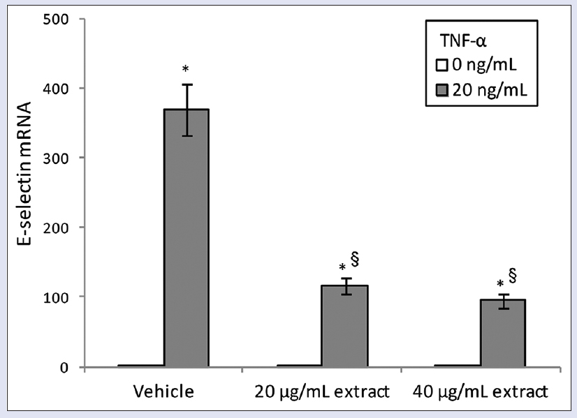 Figure 4: Effect of <i>Thymelaea microphylla</i> acetone extract on tumor necrosis factor-α induced mRNA expression of the adhesion molecule E-selectin, in human umbilical vein endothelial cells. Cells were pretreated with <i>Thymelaea microphylla</i> extract (20–40 μg/ml) for 24 h and then exposed for 2 h to tumor necrosis factor-α (20 ng/ml). Cultures treated with the vehicle alone (dimethyl sulfoxide 0.1%) were used as controls. Values are expressed as 2<sup>-ΔΔCt</sup> normalized to control and reported as mean ± standard deviation of three experiments. *<i>P</i> < 0.05 versus respective tumor necrosis factor-α 0 ng/ml; §<i>P</i> < 0.05 versus vehicle exposed to tumor necrosis factor-α 20 ng/ml