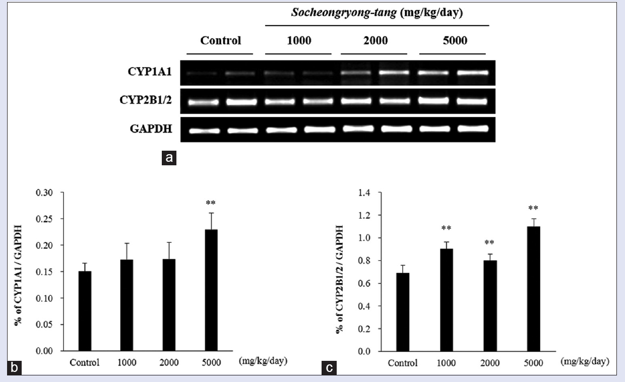 Figure 2: The messenger ribonucleic acid expression of hepatic CYP1A1 and CYP2B1/2 in male Sprague-Dawley rats treated with <i>Socheongryong-tang</i>. (a) Adult male rats were treated orally with <i>Socheongryong-tang</i> (1000, 2000, or 5000 mg/kg/day) or vehicle once a day for 13 weeks. The messenger ribonucleic acid expression of CYP1A1 and 2B1/2 was analyzed by reverse transcription polymerase chain reaction. The messenger ribonucleic acid levels of hepatic CYP1A1 (b) and CYP2B1/2 (c) were normalized to that of GAPDH. Values express as a mean ± standard deviation (<i>n</i> = 8). **<i>P</i> < 0.01 versus vehicle control group