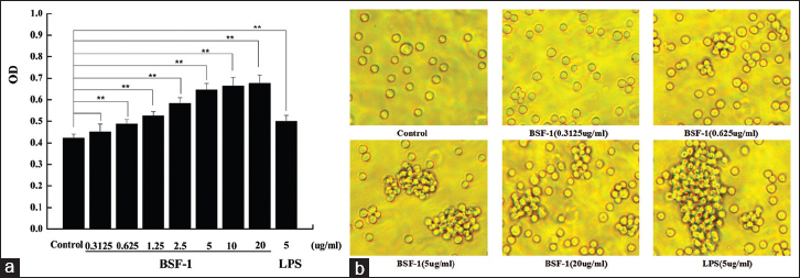 Figure 1: (a) Effects of <i>Boletus speciosus</i> Frost-1 on the proliferation of B-cells in vitro. (b) Morphological observation of B-cells