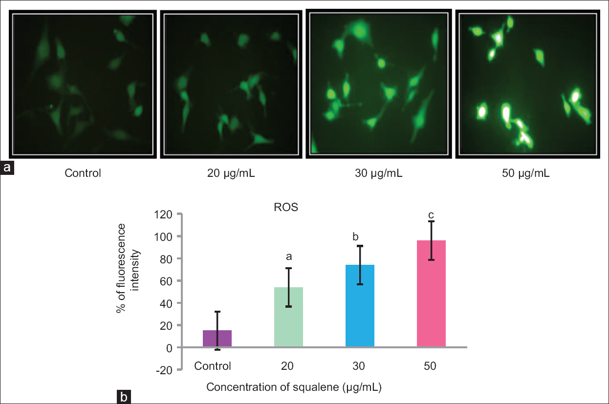 Figure 2: (a) Fluorescent microscopic image of reactive oxygen species generation in control and treated AGS cells. (b) Level of reactive oxygen species in untreated and treated AGS cells. Values are given as mean ± standard deviation of six experiments in each group. Values not sharing a common superscript differ significantly at <i>P</i> < 0.05 (Duncan's multiple range test)