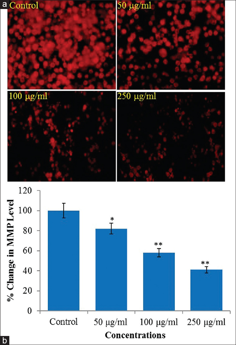 Figure 5: (a) Seed oil of <i>Fenugreek</i> induced reduction in the intensity of mitochondrial membrane potential level in human hepatocellular carcinoma cells exposed for 24 h. mitochondrial membrane potential was studied using Rh123 fluorescent dye. (b) Percentage reduction in mitochondrial membrane potential level in human hepatocellular carcinoma cells following the exposure of various concentrations of <i>Fenugreek</i> seed oil for 24 h. *<i>P</i> < 0.01, **<i>P</i> < 0.001 versus control