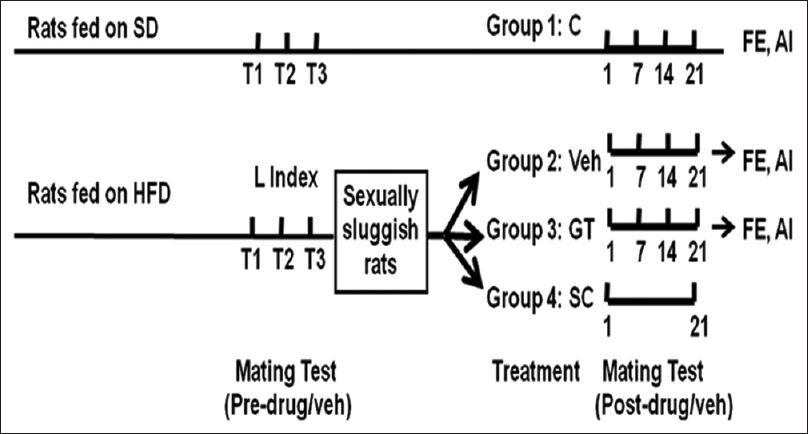 Figure 1: Experimental protocol of the study. T1–T3 denotes three mating tests before drug/veh treatment, and 0, 7, 14, 21 designates days after drug/veh treatment. No drug/Veh treatment was given to SD fed Group 1 rats. SD: Standard diet; HDF: High-fat diet; Veh: Vehicle; GT: <i>Guibourtia tessmannii;</i> SC: Sildenafil citrate; FE: Fictive ejaculation; AI: Adiposity index