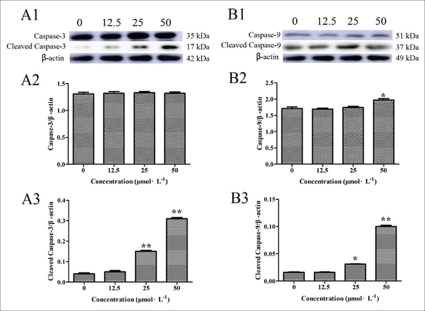 Figure 4: Effect of Juglone at different concentrations on the expression of caspase 3 (A1, A2)/9 (B1, B2) and cleaved caspase 3 (A3)/9 (B3) protein in Michigan Cancer Foundation-7 cells. The data were expressed as mean ± standard error per group. *<i>P</i> < 0.05 versus the blank group, **<i>P</i> < 0.01 versus the blank group