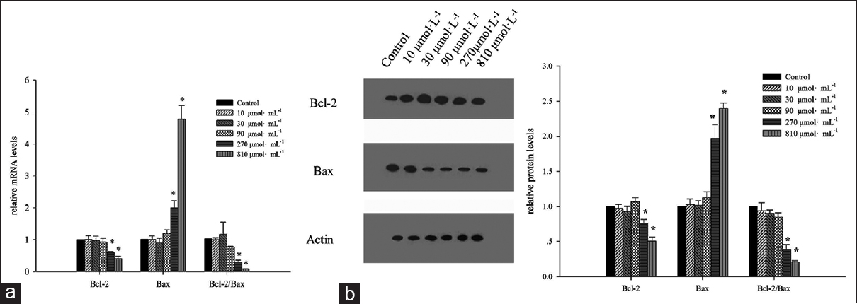 Figure 5: Changes of the mRNA and protein levels of Bcl-2 and Bax genes in the breast cancer stem-like cells after rosmarinic acid treatment. (a) Quantitative reverse transcriptase polymerase chain reactionwas used to compare the changes of the mRNA levels after 0, 10, 30, 90, 270 and 810 µmol/L rosmarinic acid treatment for 48 h. (b) Immunoblot analysis was used to compare the protein levels after 0, 10, 30, 90, 270 and 810 µmol/L rosmarinic acid treatment for 48 h. Data presented as bar representing mean value and error bars showing standard deviation. *<i>P</i> < 0.05 compared to the control