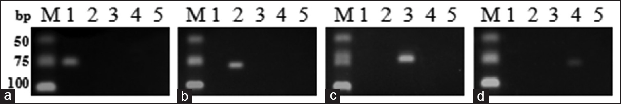 Figure 1: Specificity test on self-made samples for four designed primer sets. (a) PEA; (b) PBT; (c) PSS; (d) PEC; M: Deoxyribonucleic acid marker; Lane 1: Asini Corii Colla; Lane 2: Taurus Corii Colla; Lane 3: SCC; Lane 4: CCC; Lane 5: Negative control