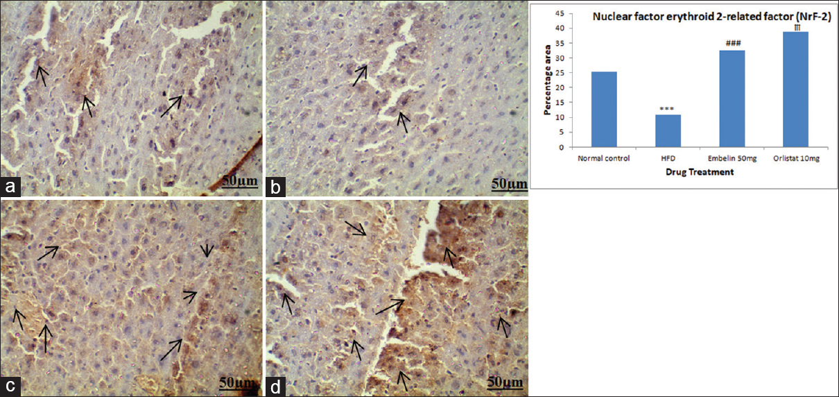 Figure 4: Photomicrograph<b></b>  of immunohistochemical staining revealing NrF-2 activation in liver cells. (a) Mice treated with normal chow diet showing normal liver cells. (b) Mice treated with high fat diet for a period of 8 weeks. (c) Treatment of embelin (50 mg/kg/day, p.o.) from 5<sup>th</sup> to 8<sup>th</sup> week in high fat diet fed mice. (d) Treatment of orlistat (10 mg/kg/day, p.o.) from 5<sup>th</sup> to 8<sup>th</sup> week in high fat diet fed mice. Black arrows are showing NrF-2 activation. Data are expressed as mean ± standard error of mean (<i>n</i> = 6 animals per group). Significance difference was determined by one-way analysis of variance followed by Tukey's multiple comparison test. ***<i>P</i> < 0.001 high fat diet versus normal control;<sup>###</sup><i>P</i> < 0.001 embelin 50 mg versus high fat diet;<sup>†††</sup><i>P</i> < 0.001 orlistat 10 mg versus high fat diet