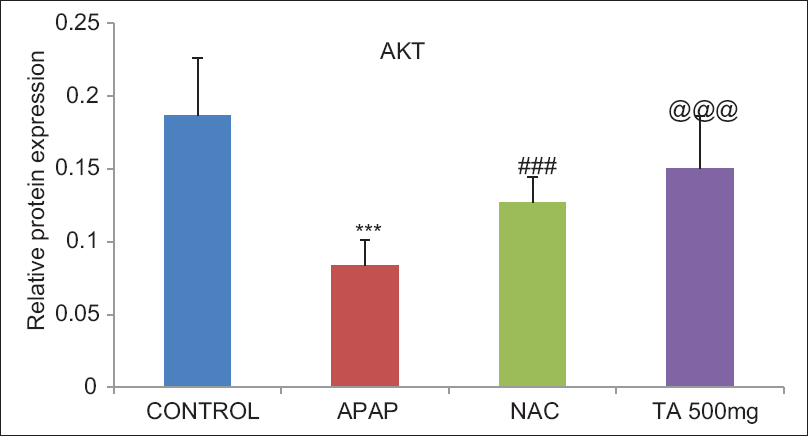Figure 8: Quantitative data for P-AKT 308 protein expression. Data were obtained by computerized analysis of the Western blots and results were expressed as mean ± standard error of the mean. ***<i>P</i> < 0.001 statistically significant as compared with control group rats; <sup>###,@@@</sup><i>P</i> < 0.001 statistically significant as compared with acetaminophen group rats
