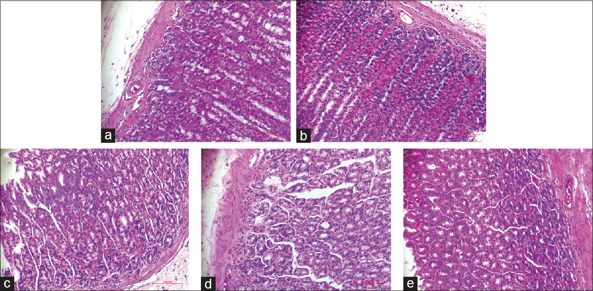 Figure 2: Histological examination of gastric tissues from all the experimental groups. (a) Control group, (b) Model group, (c) Huangqi Jianzhong Tang-treated group, (d) Huangqi Jianzhong Tang without YT-treated group, (e) YiTang-treated group