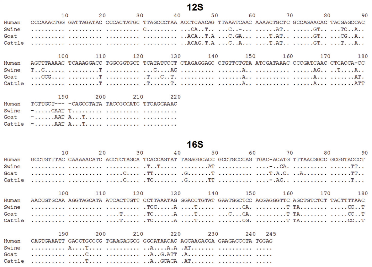 Figure 3: Alignment of the polymerase chain reaction target sequences of 12S and 16S of four species. Using the human sequence as the reference, the identical and gap bases of other species are abbreviated by dot and dash, respectively. At full page width