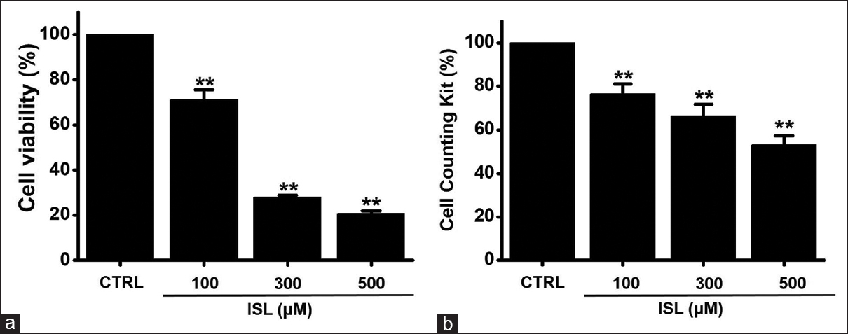 Figure 1: Effect of isoliquiritigenin on 5637 cell viability. Cell viabilities were investigated using (a) an 3-[4,5-dimethylthiazol-2-yl]-2,5-diphenyltetrazolium bromide assay and (b) a cell counting kit-8 assay. Isoliquiritigenin dose dependently reduced cell viabilities for 24 h. Results are presented as mean ± standard error of the mean. ISL: Isoliquiritigenin; CTRL: Control. **<i>P</i> < 0.01 versus untreated cells