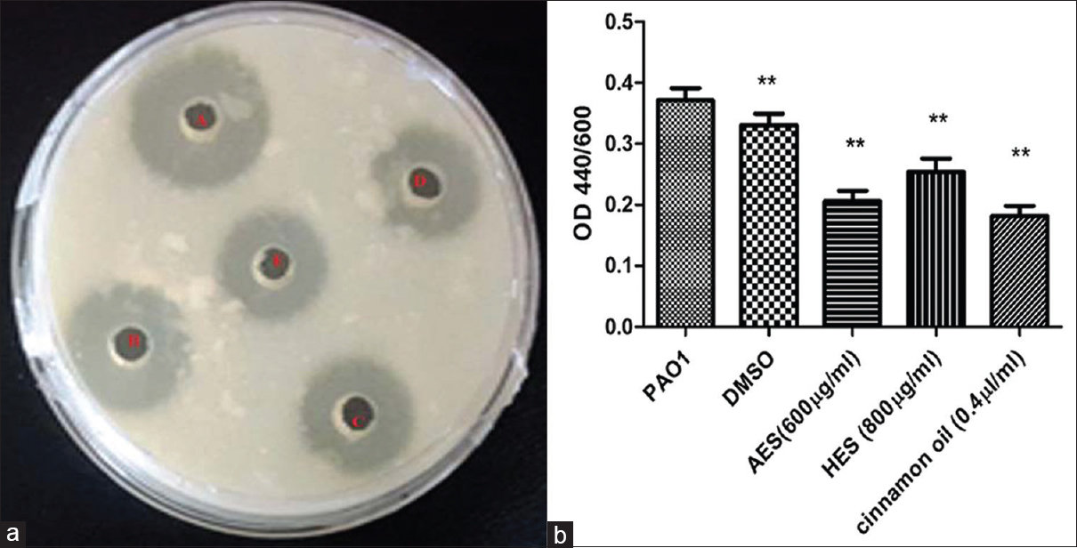 Figure 4: Effect of acetone and hexane extract of <i>Senna alexandrina</i> Mill on protease production (a) Skim milk agar assay (a) <i>Pseudomonas aeruginosa</i> PAO1 (b) dimethyl sulfoxide Acetone extract of <i>Senna alexandrina</i> Mill Hexane extract of <i>Senna alexandrina</i> Mill <i>Cinnamon oil</i> (b) Azocasein assay. All the experiments were performed in triplicates, and the error bar represents the standard error mean of three measurements. ***indicates the samples which were significant (one-way analysis of variance <i>P</i> < 0.001)